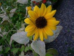 2008、9月押し花講習会 523.jpg