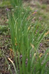 3月菜園 004.jpg