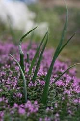 3月菜園 031.jpg
