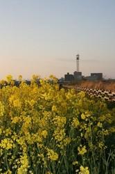 4月 菜の花夕日 214.jpg