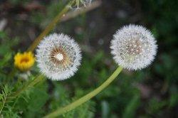 4月庭の花 080.jpg