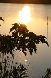 8月 大池の日の出 079.jpg