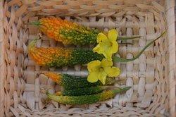 8月野菜の収穫 006.jpg