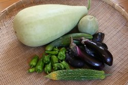 8月野菜の収穫 007.jpg