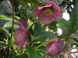 2009 庭の花 002.jpg