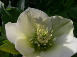 2009 庭の花 004.jpg
