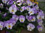 2009 庭の花 011.jpg