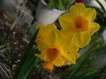 2009 庭の花 016.jpg
