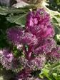 2009 庭の花 034.jpg