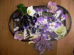 2009 庭の花 041.jpg