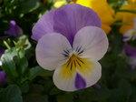 2009 庭の花 047.jpg