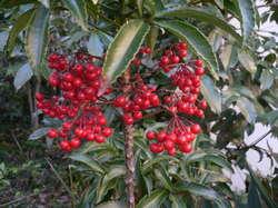 クリスマスツリー 354.jpg
