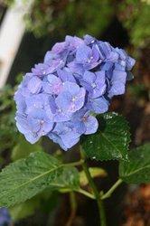 雨の庭 024.jpg