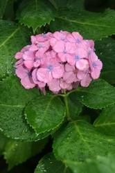 雨の庭 029.jpg