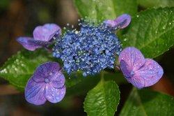 雨の庭 043.jpg
