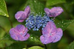 雨の庭 053.jpg