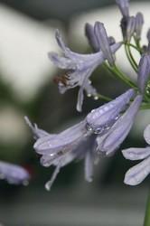 雨の庭 097.jpg