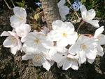 押し花展と浜松城、大沼池 223.jpg