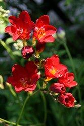 家庭菜園 041.jpg