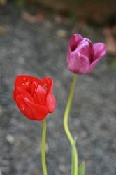家庭菜園 053.jpg