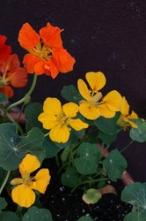 家庭菜園 896.jpg