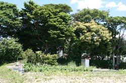 家庭菜園2 070.jpg