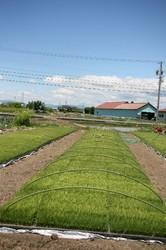 家庭菜園2 106.jpg
