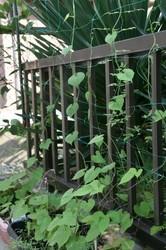 家庭菜園庭7月 079.jpg