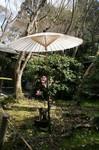 京都 527.jpg