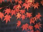 京都旅行〜金閣寺〜嵐山〜龍成寺〜清水寺 379.jpg