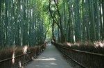京都旅行〜大覚寺〜嵐山〜竹林〜銀閣寺〜 255.jpg