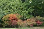 京都旅行〜大覚寺〜嵐山〜竹林〜銀閣寺〜2 357.jpg