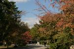 京都旅行〜大覚寺〜嵐山〜竹林〜銀閣寺〜2 398.jpg
