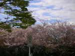 佐鳴湖と押し花教室 004.jpg
