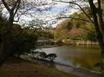 佐鳴湖と押し花教室 074.jpg