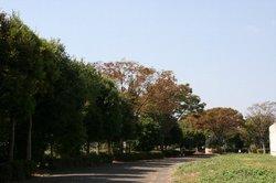 秋の大池 012.jpg