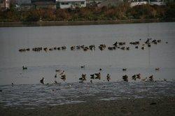 秋の大池 032.jpg