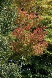 秋の大池 048.jpg
