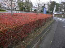 秋の大池 134.jpg