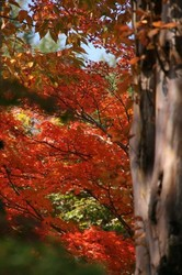 清里富士山 028.jpg