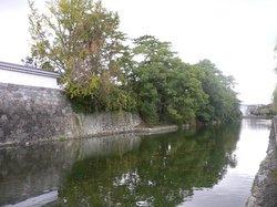 大道芸 454.jpg