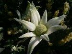 庭の花 003.jpg