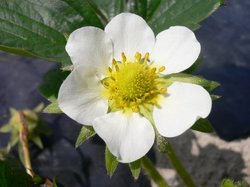 庭の花 1014.jpg