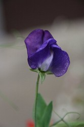 庭の花 1059.jpg