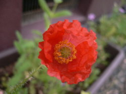 庭の花 1085.jpg