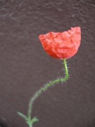 庭の花 1090.jpg