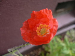 庭の花 1092.jpg