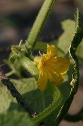 庭の花 1173.jpg