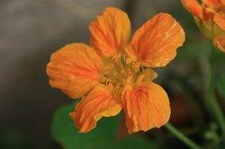 庭の花 1267.jpg