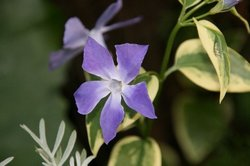 庭の花 580.jpg